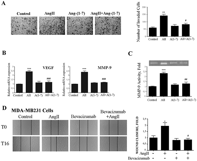 Ang-(1-7) abolishes AngII-induced breast cancer cell invasion, MMP-9 activity and VEGF and MMP-9 expression.