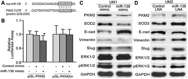 The miR-138-PKM2pathwayregulates TSCC cell migration/invasion.