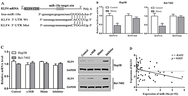 KLF4 is the target of miR-18a in HCC cells.