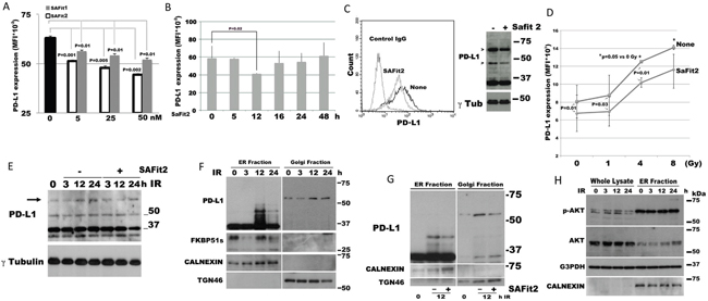 SAFit reduces the expression of PD-L1.