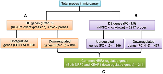 Oncotarget | NRF2-regulated metabolic gene signature as a prognostic ...