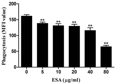 Effect of TgESAs on the phagocytosis of Ana-1 cells by flow cytometry.