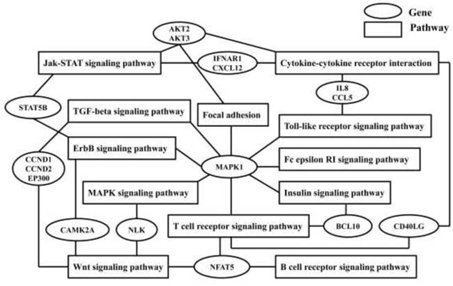 Common genes and relevant pathways' crossing network of seven validated differential expression microRNAs.