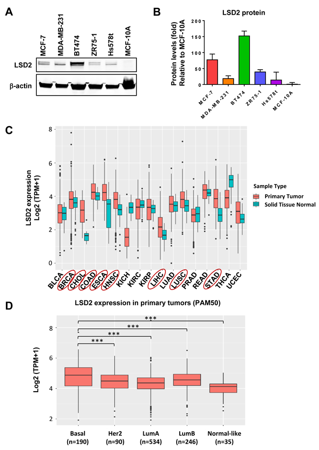 Oncotarget Functional Characterization Of Lysine Specific