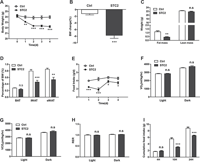 Systemic STC2 treatment reduces appetite and promotes weight loss in C57BL/6 mice.