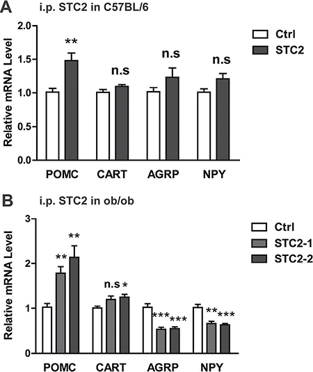 STC2 modulates hypothalamic AGRP, NPY, POMC and CART expression.