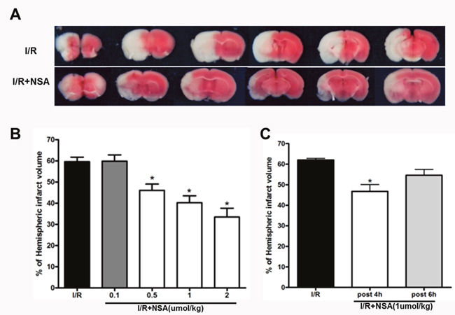 NSA treatment reduced infarct volume after cerebral I/R injury.