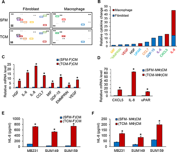 IL-8 protein expression is increased in fibroblasts or macrophages induced by TCM of TNBC cells.