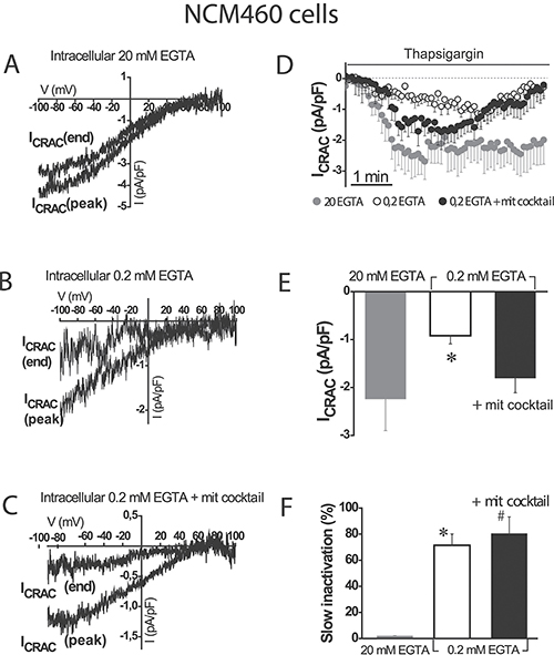 Mitochondria modulate activation of store-operated currents (SOCs) but are not able to prevent the slow, Ca2+-dependent inactivation in normal colonic cells.