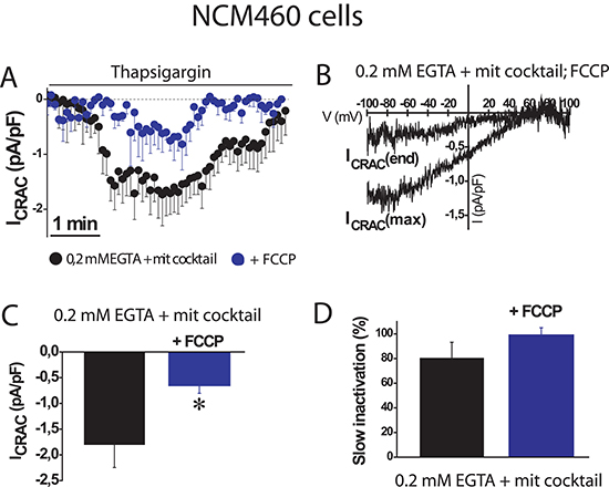 FCCP prevents SOC activation in normal colonic cells.