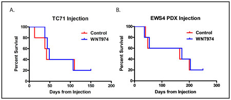 WNT974 does not prolong survival in a tail vein injection model.