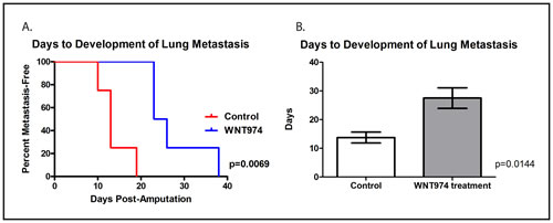 WNT974 prolongs the time to development of lung metastasis.