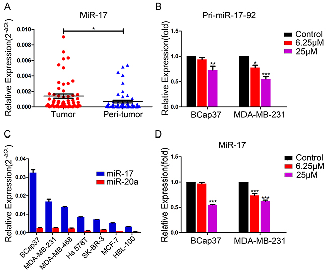 Endogenous expression of miR-17 in breast cancer cells and suppression of pri-miR-17-92 and miR-17 by resveratrol.