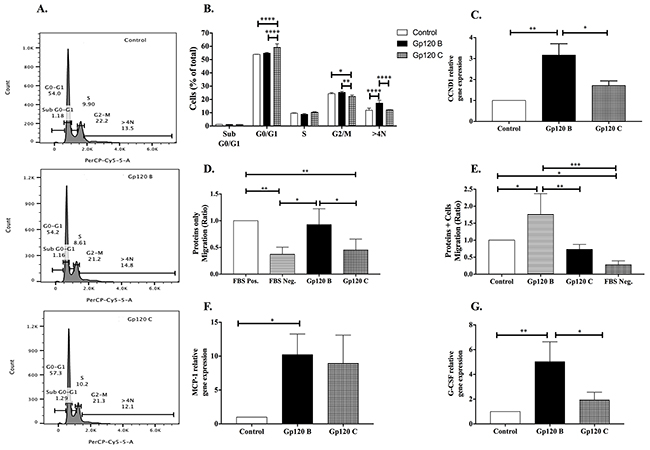 HIV-1 gp120 B stimulates cell proliferation and migration while HIV-1 gp120 C induces G0/G1 cell cycle arrest.