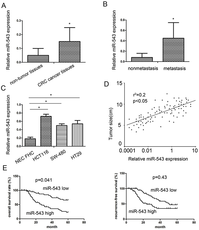 miR-543 is overexpressed in primary CRC tumor tissues and cell lines and correlates with patient survival.