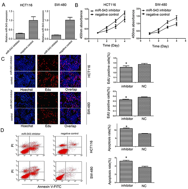 miR-543 promotes cell proliferation and reduced apoptosis of CRC cells.