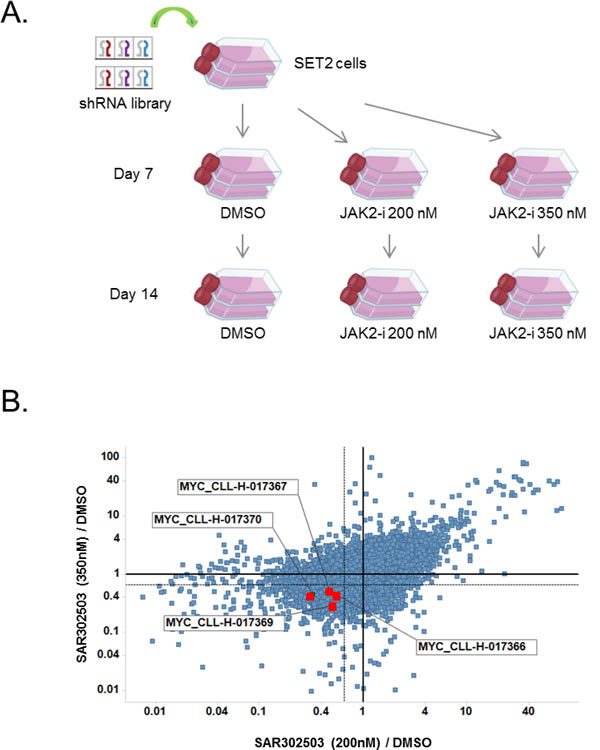 MYC is a top hit in a pooled shRNA screen to identify combination partners for JAK2 inhibitor.