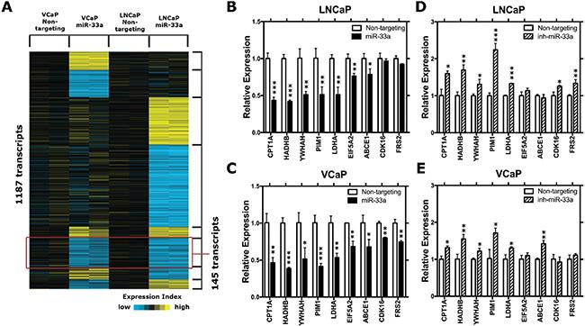 MiR-33a target genes.