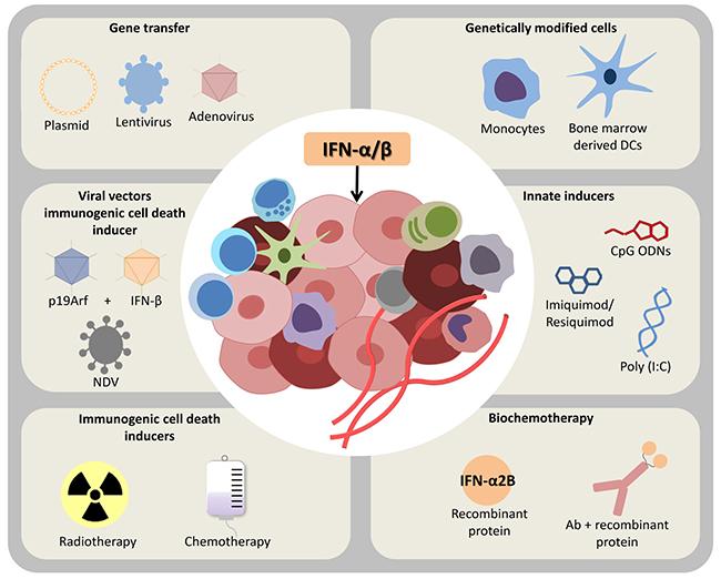 Oncotarget | Immunomodulatory and antitumor effects of type