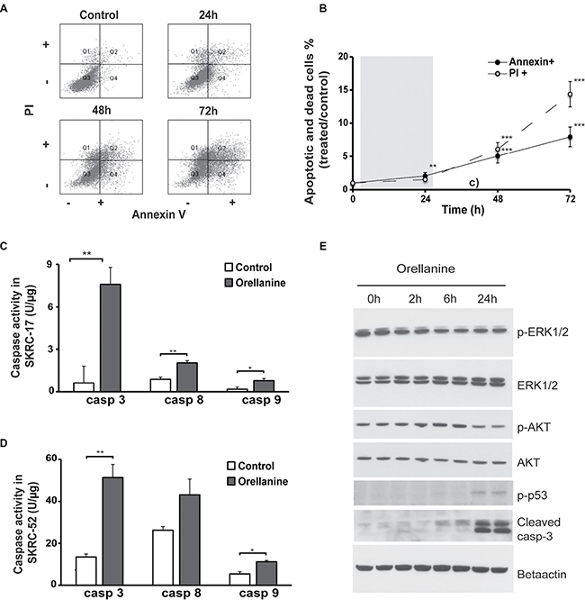 Orellanine promotes cell death in clear cell renal carcinoma cells.