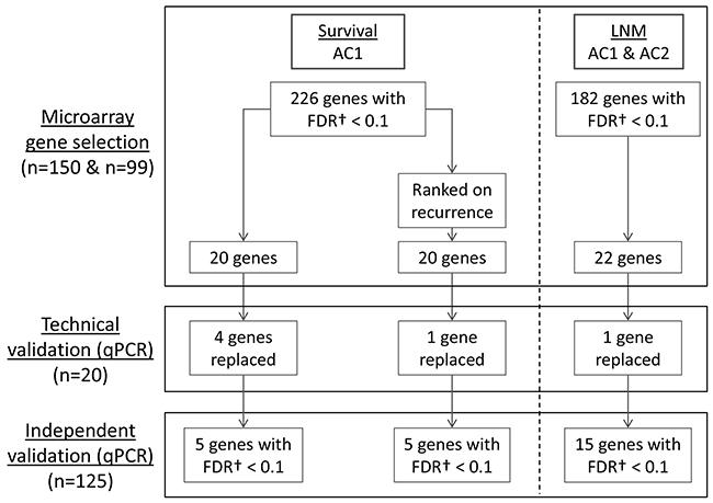 Oncotarget   Prognostic modeling of oral cancer by gene