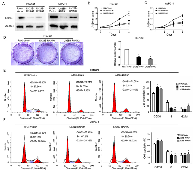 Lin28B silencing inhibits pancreatic cancer cell proliferation and induces cell cycle arrest.