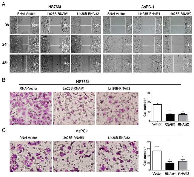 Lin28B silencing inhibits pancreatic cancer cell migration.