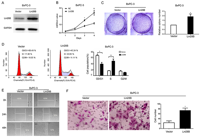 Lin28B promotes the aggressive phenotype of pancreatic cancer cells.