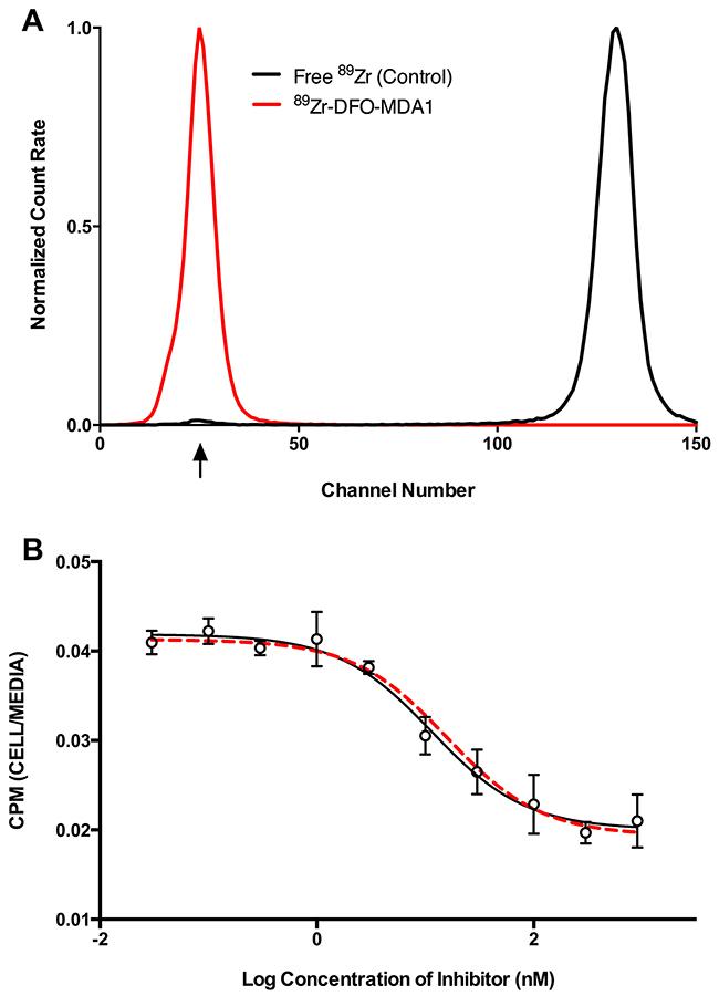 In vitro characteristics of 89Zr-DFO-MPA1.