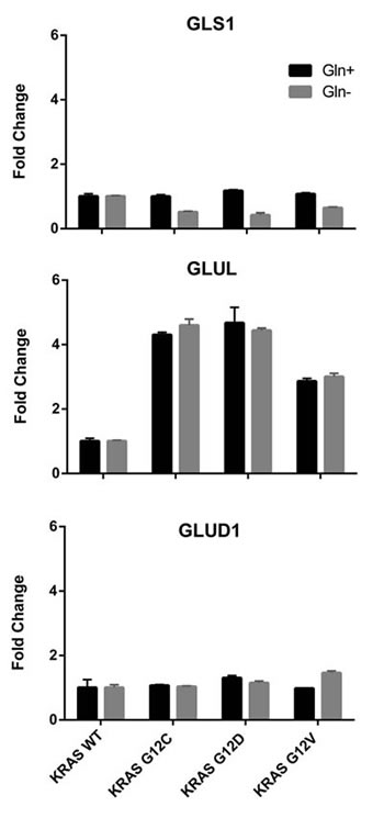 Relative expression levels of genes encoding glutamine-metabolizing enzymes in the indicated clones determined by real-time PCR, with (black bars) or without (grey bars) glutamine.