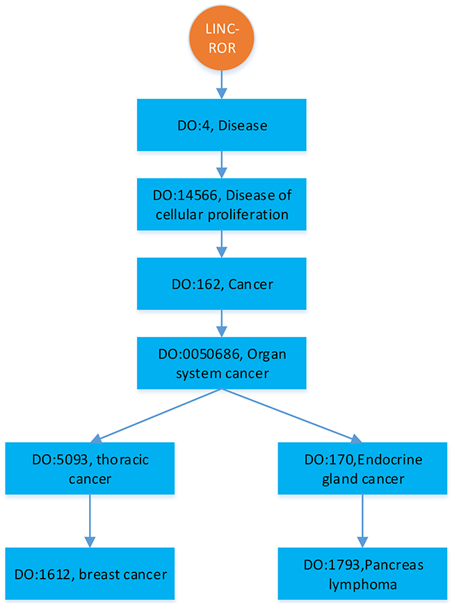 An illustration of hierarchically structured diseases associated with LINC-ROR.