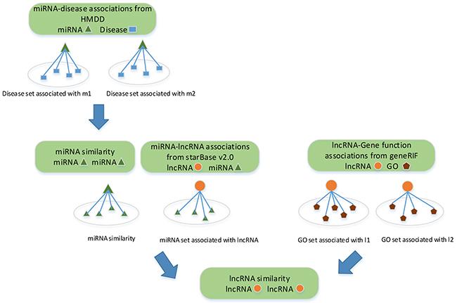 Flowchart of lncRNA similarity measurement.