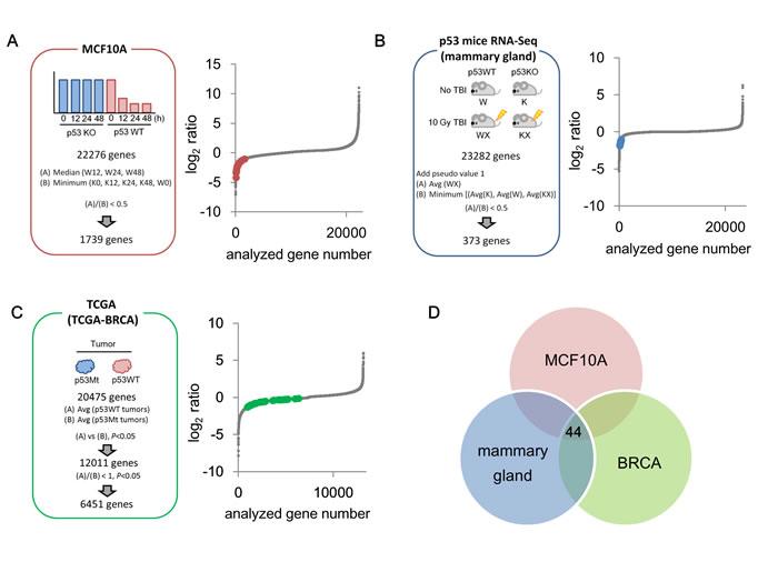 Identification of p53-repressed gene candidates.