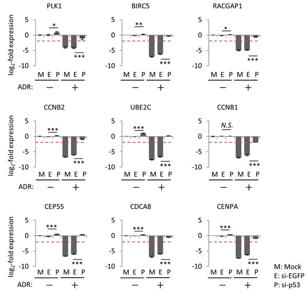 Effect of p53 knockdown on the regulation of common p53-repressed genes.