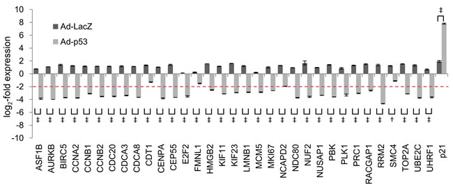 Effect of Ad-p53 on the regulation of common p53-repressed genes.