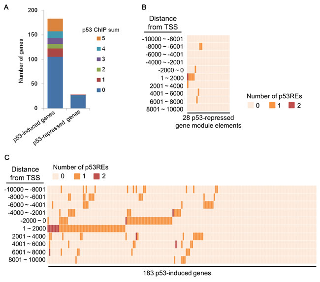 p53REs around TSS of p53-mediated genes.