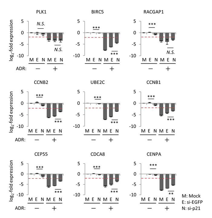 Effect of p21/CDKN1A knockdown on the regulation of p53-repressed gene module.