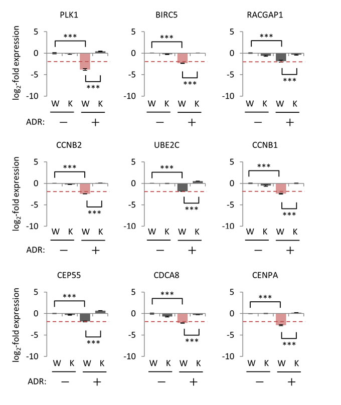 Effect of p21/CDKN1A knockout on the regulation of p53-repressed gene module.