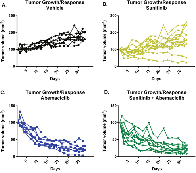 Abemaciclib causes tumor regression as monotherapy and in combination with sunitinib.