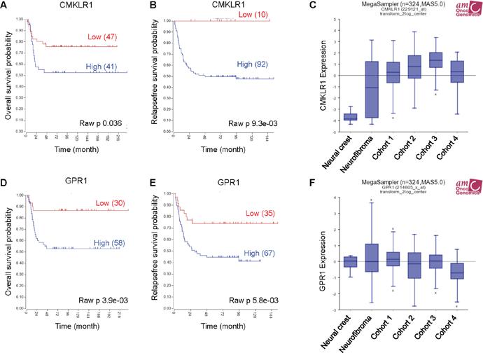 High CMKLR1 and GPR1 expression predicts poor survival in neuroblastoma patients.
