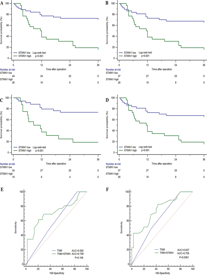 Subgroup Kaplan-Meier analyses of overall survival to assess prognostic value of STMN1 in GBC patients.