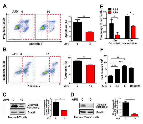 Adiponectin exerts anti-apoptotic effects in mouse and human pancreatic cancer cells.