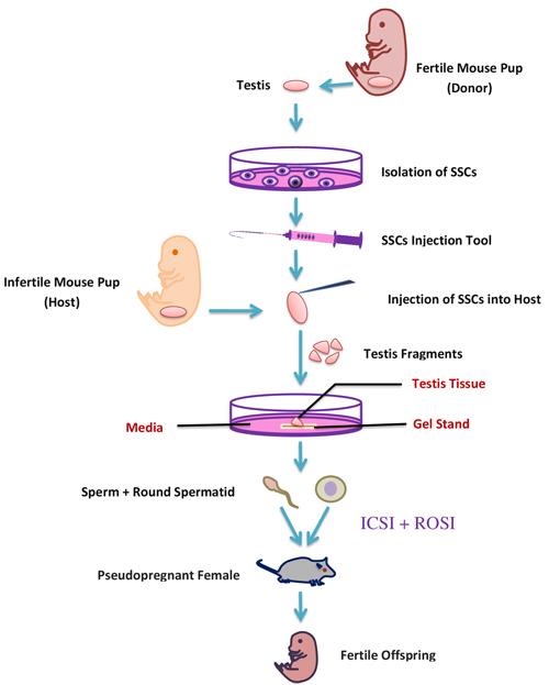 A schematic representation of