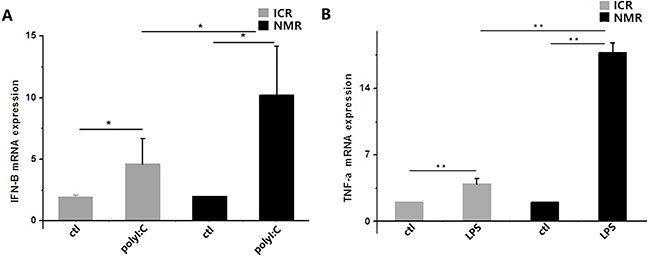 PolyI:C- and LPS-stimulated macrophage cytokine expression in naked mole rats and ICR mice.