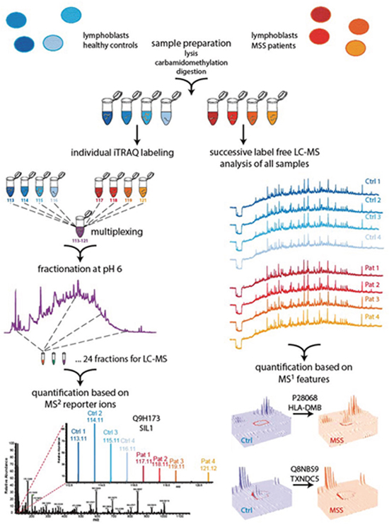 Two-pronged proteomic workflow using (i) label free quantification for more accurate ratio determination between MSS and control samples and (ii) iTRAQ-based quantification to obtain a deeper proteome coverage.