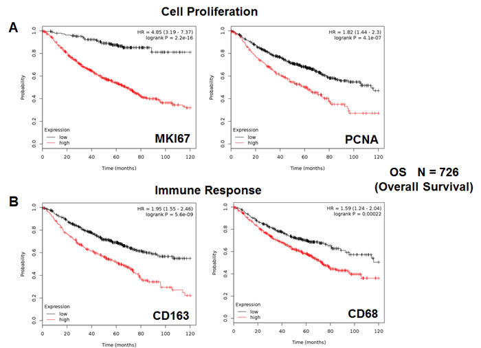 Markers of proliferation and inflammation predict poor overall survival in high-risk lung cancer patients.