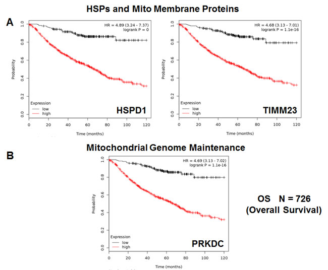 HSPD1, mitochondrial membrane proteins and PRKDC are associated with poor clinical outcome in lung cancer patients.
