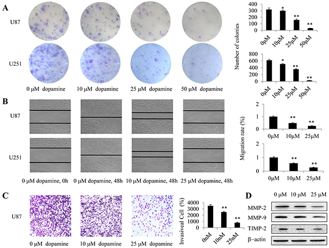 Dopamine suppressed cell colony formation, migration and invasion.