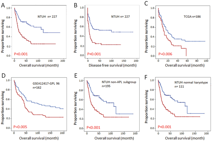 Kaplan Meier survival curves for AML patients stratified by DOCK1 expression levels.