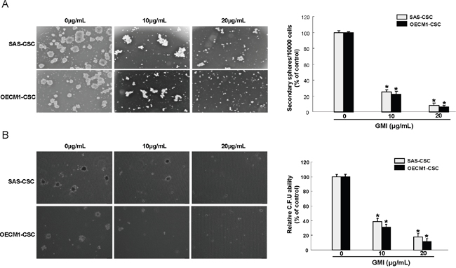 Inhibition of self-renewal property and clonogenicity in OCSC under GMI treatment.